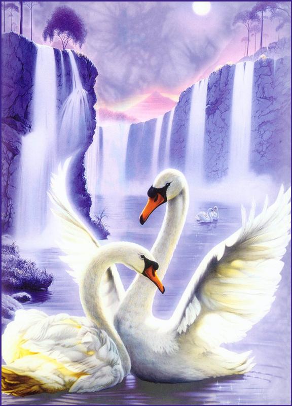 Джон Мейк. Лебеди