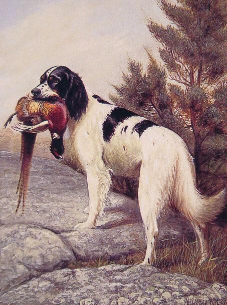 Охотничья собака с фазаном