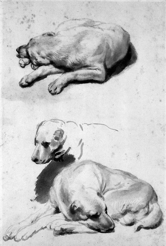 Гербранд ван ден Экхоут. Наброски собаки