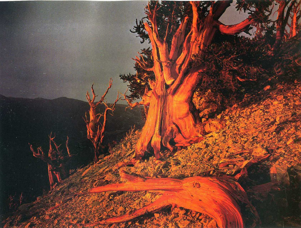 Дэвид Мюнх. Ствол дерева