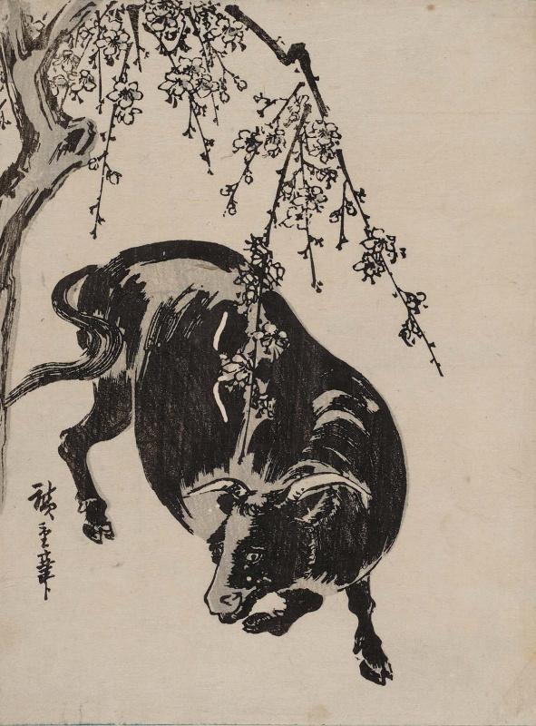 Утагава Хиросигэ. Бык под цветущим вишневым деревом