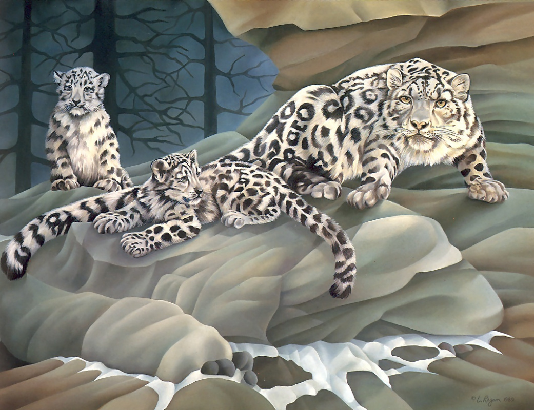 Laura Regan. Snow leopard