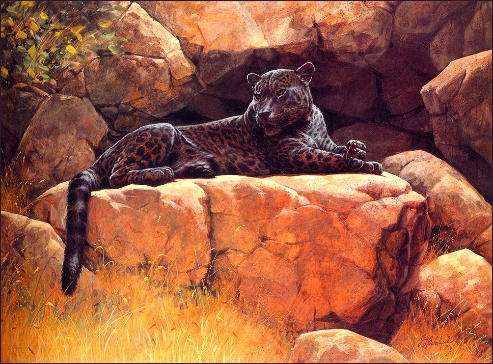 Гай Кохелич. Черный ягуар