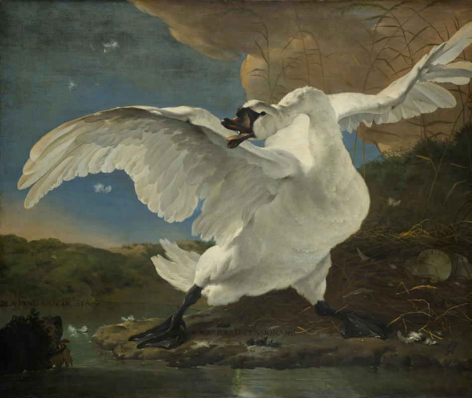 Ян Асселейн. Угрожающий лебедь