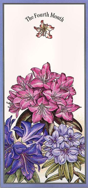 Офа. Цветочный календарь. Апрель