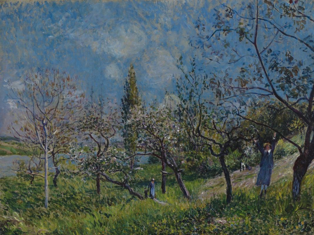 Alfred Sisley. Fruit garden in spring