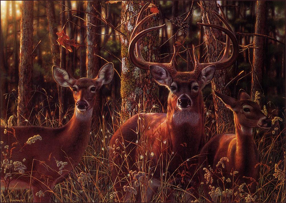 Jay Kemp Shedows. White-tailed deer