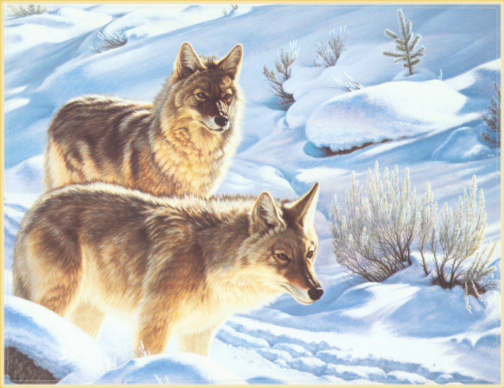 Пол Крапф. Волки в снегу