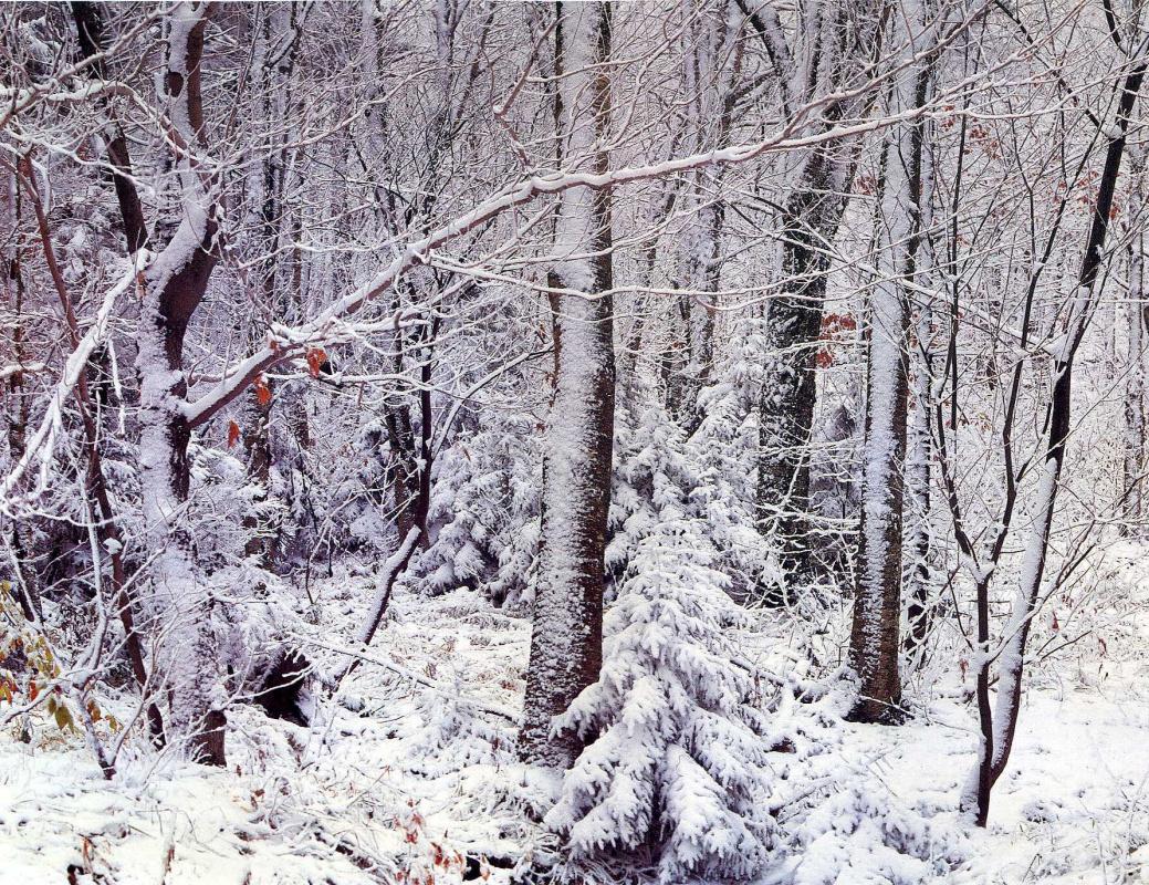 David Munich. Snow