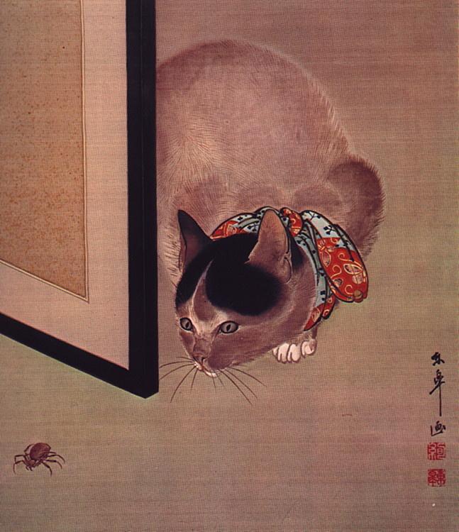 Токо. Кот и паук