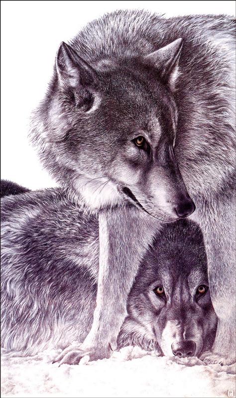 Жермен Конка. Волки
