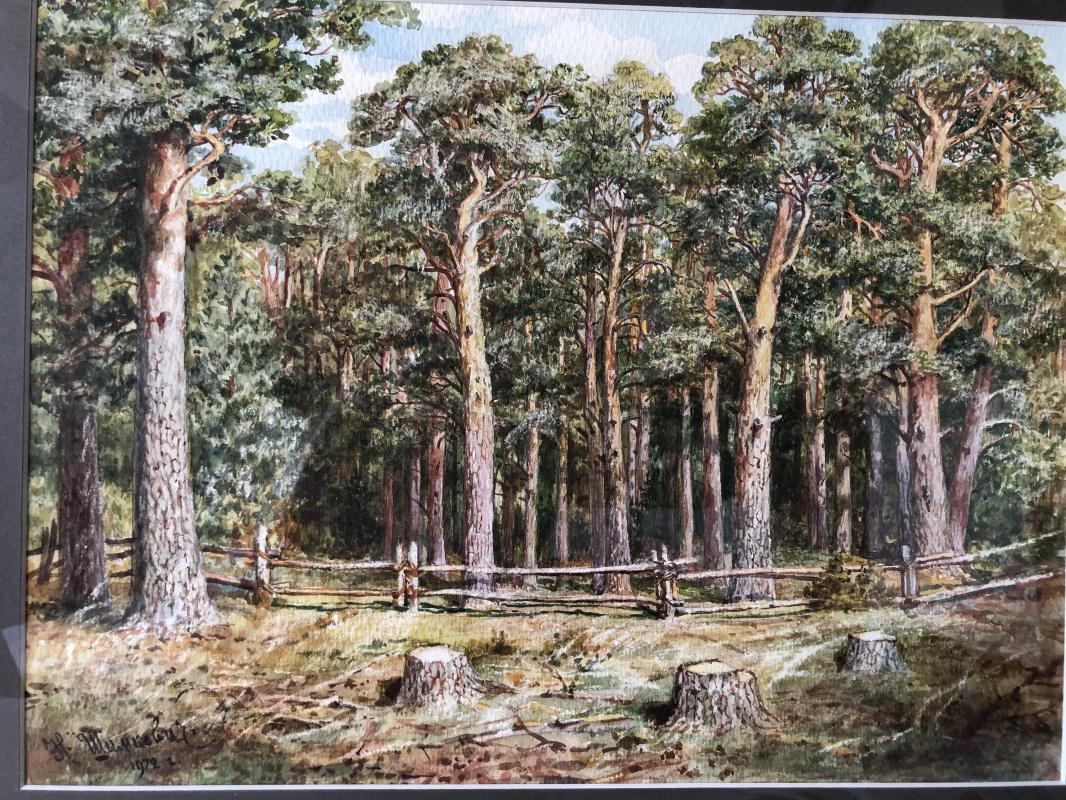 Nikolay Nikolaevich Shimkovich. Landscape