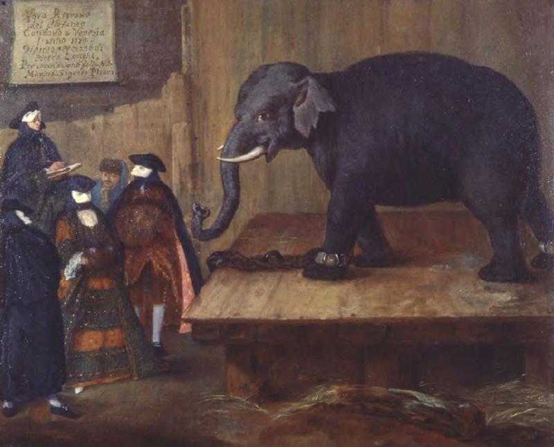 Pietro Longi. Elephant
