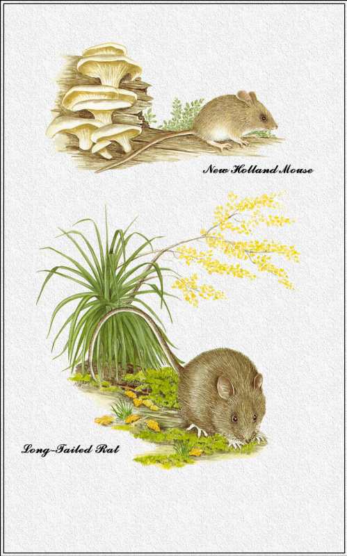 Марион Уэстмакотт. Австралийские млекопитающие 75
