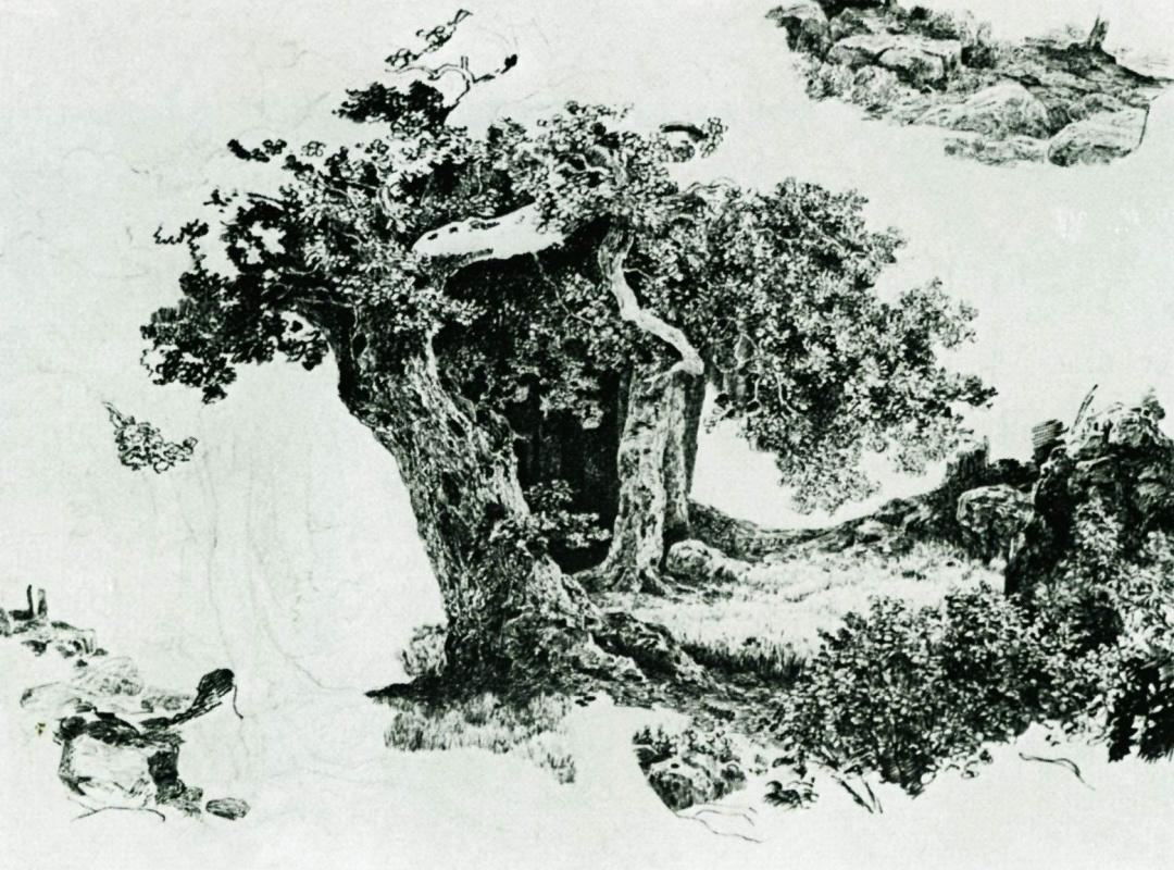 Иван Иванович Шишкин. Группа лиственных деревьев и камни