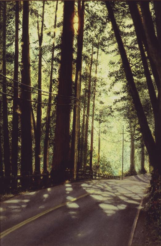 Вирджил Эллиотт. Тени в лесу
