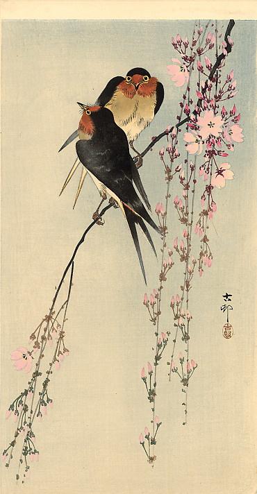 Ohara Koson. Barn swallows on blossoming cherry