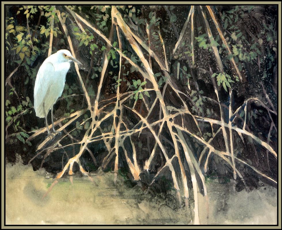 Roger Bansemer. The inhabitants of the mangroves