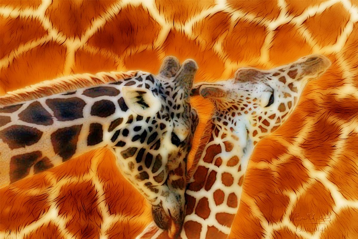 Vasiliy Mishchenko. Giraffes at dawn