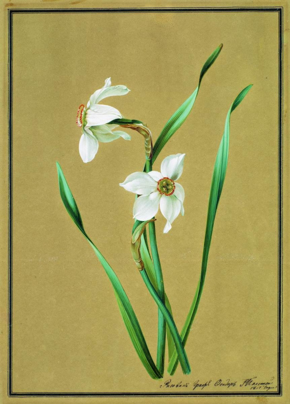 Fedor Petrovich Tolstoy. Narcissus