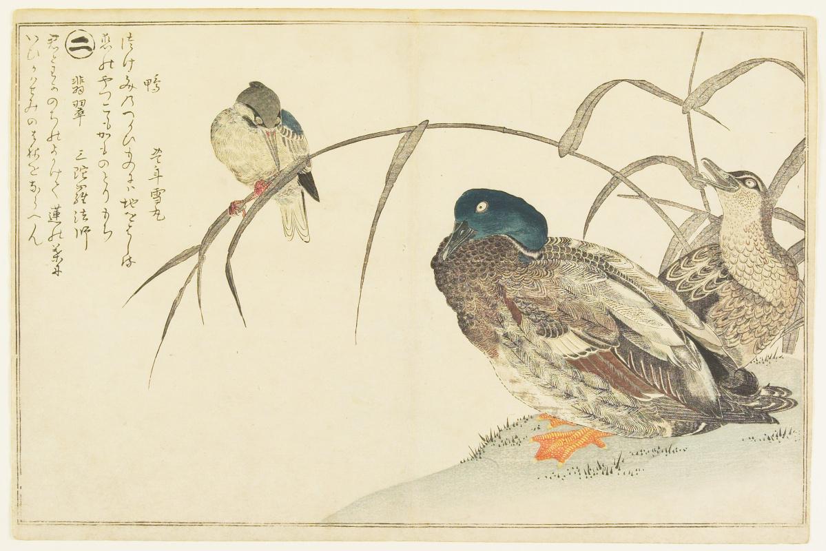 Kitagawa Utamaro. Wild duck and kingfisher
