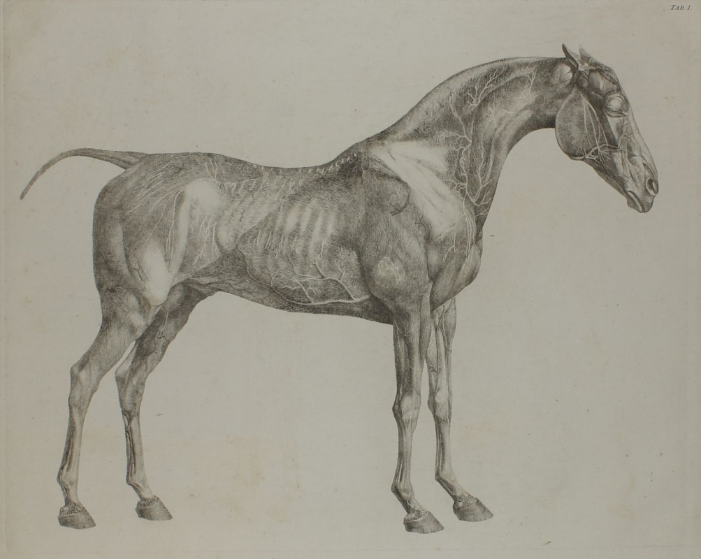 The Anatomy Of The Horse By George Stubbs History Analysis Facts