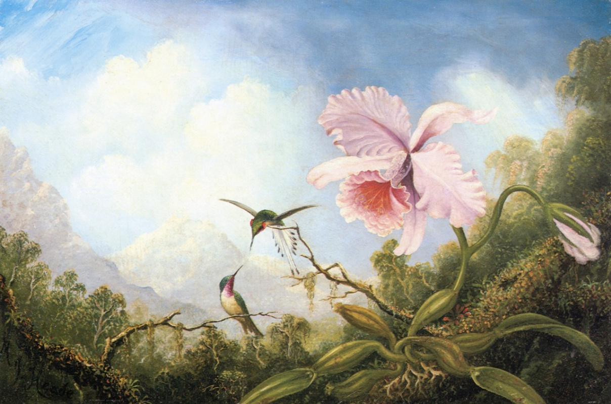 Martin Johnson Head. Two hummingbirds and an orchid