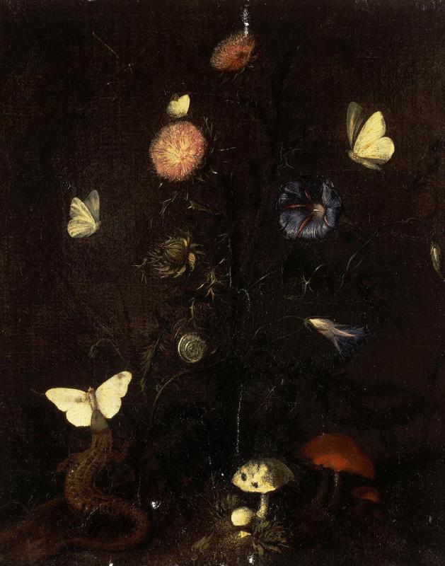 Цветы, ящерица и бабочки