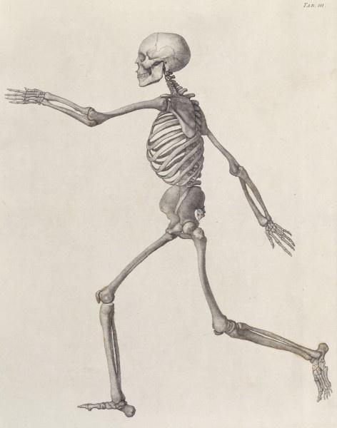 George Stubbs. Human skeleton