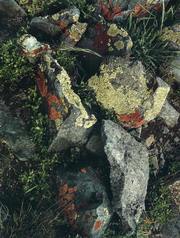 Элиот Портер. Лесной пейзаж 5