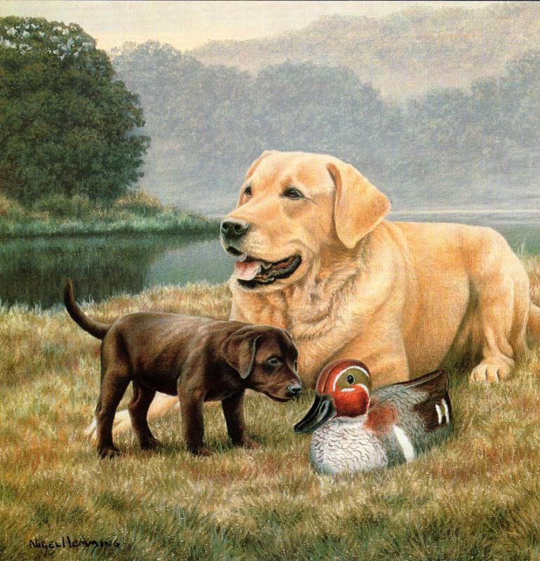 Найджел и Даниэль Кевин Хемминг. Собаки и утка