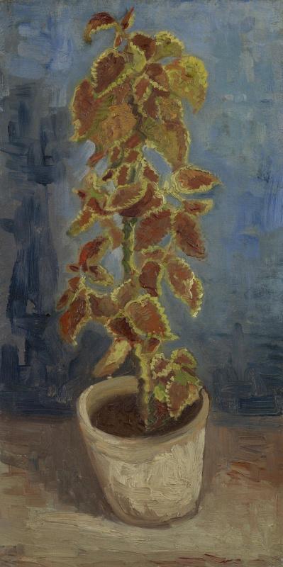 Винсент Ван Гог. Колеус в цветочном горшке