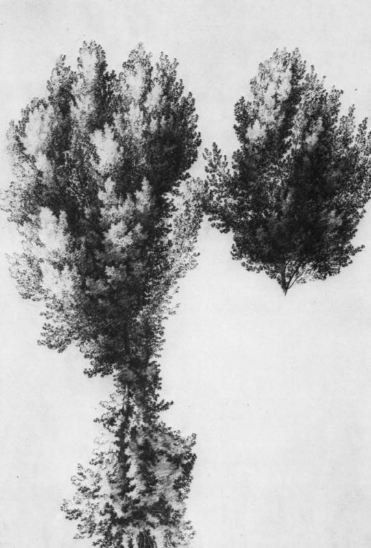 Вильгельм Ноак. Большой этюд дерева
