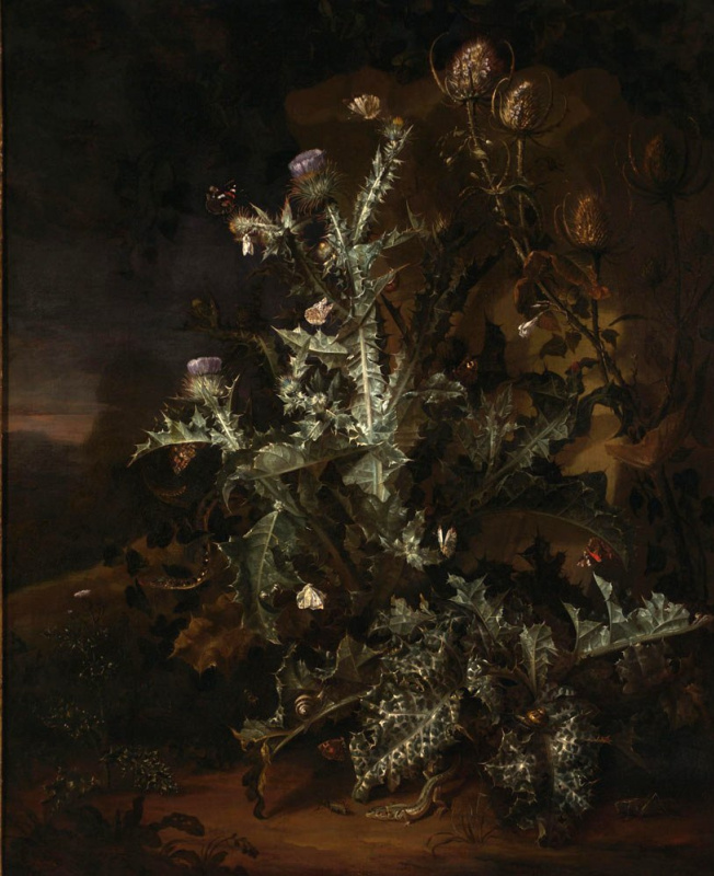 Otto Marceus van Scriec. Still life with Thistle