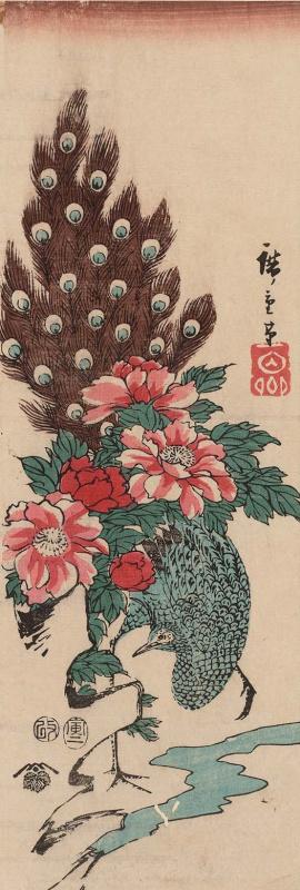 Утагава Хиросигэ. Павлин у ручья и распустившиеся пионы
