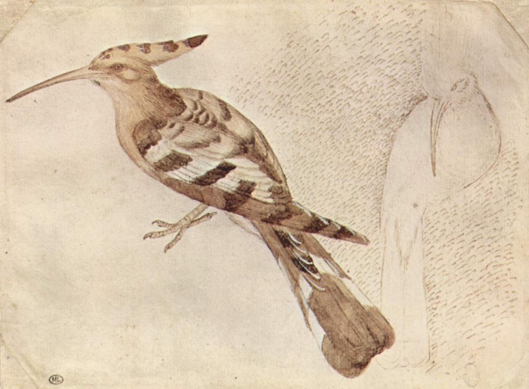 Антонио Пизанелло. Птица