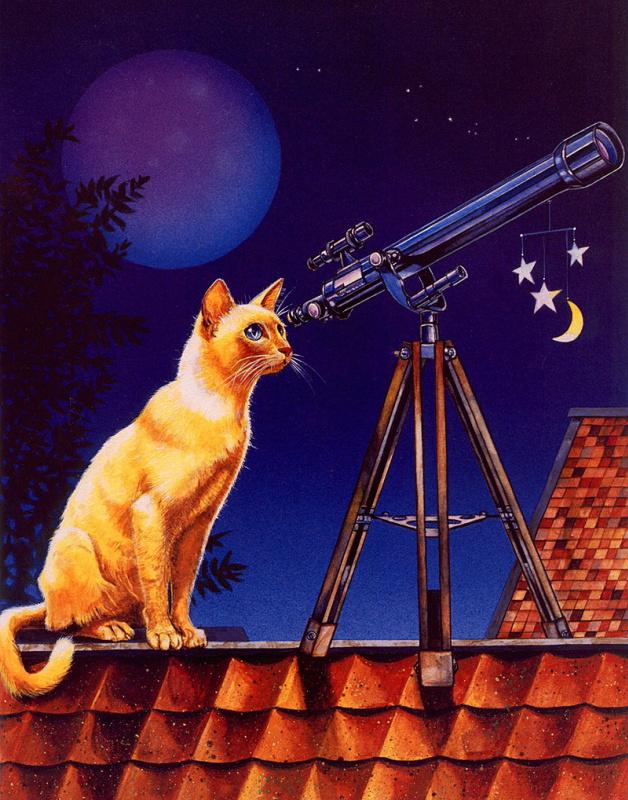 Валь и Рон Линдхан. Кот с подзорной трубой