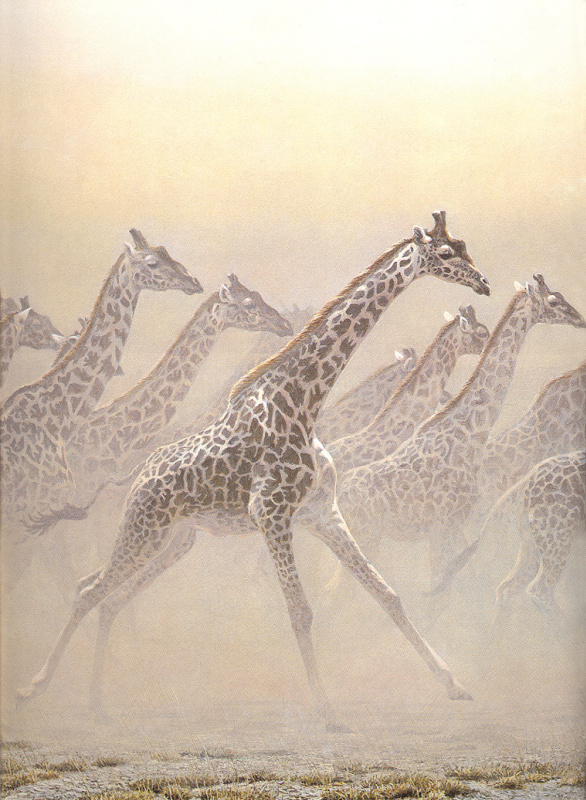 Bateman-Галлопинг Стадо. Жирафы