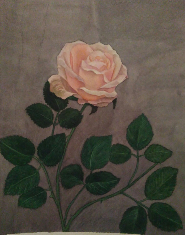 Lyudmila Kachur. Rose flower