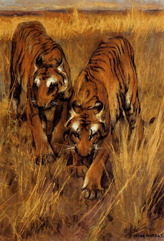 Артур Уордл. Тигры