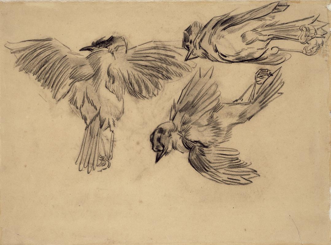 Vincent van Gogh. The dead sparrows
