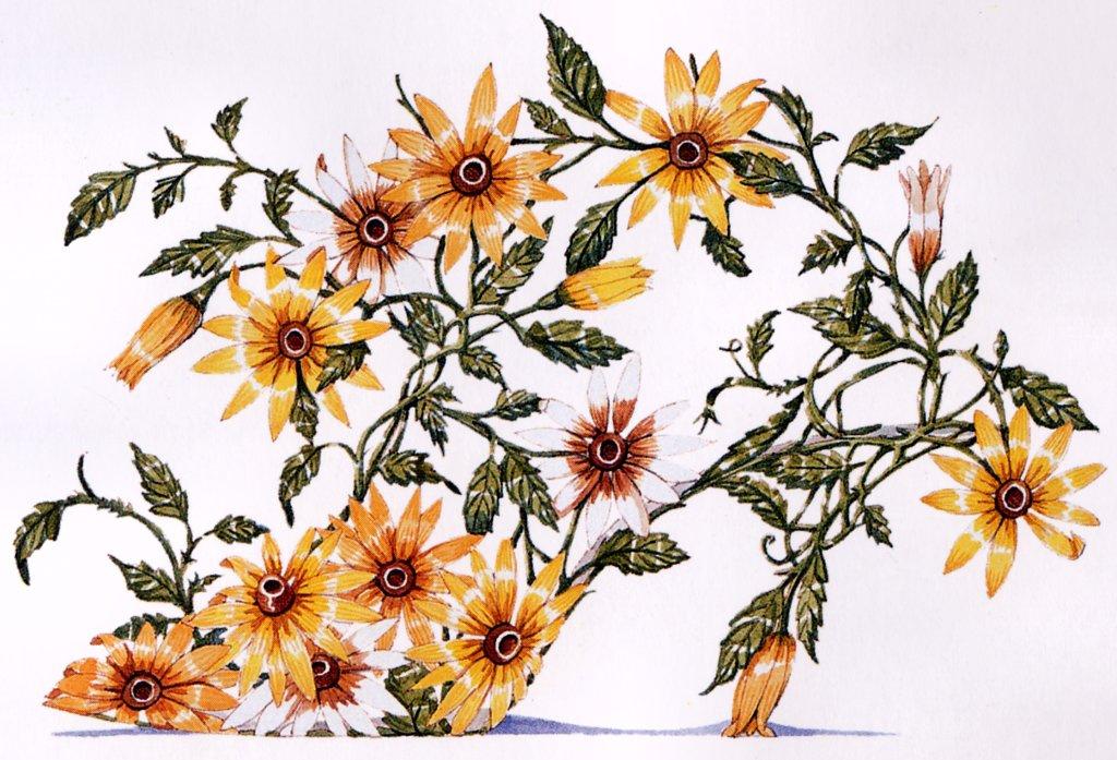 Dennis Kite. Daylilies