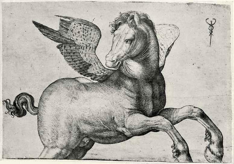Jacopo de Barbary. Pegasus