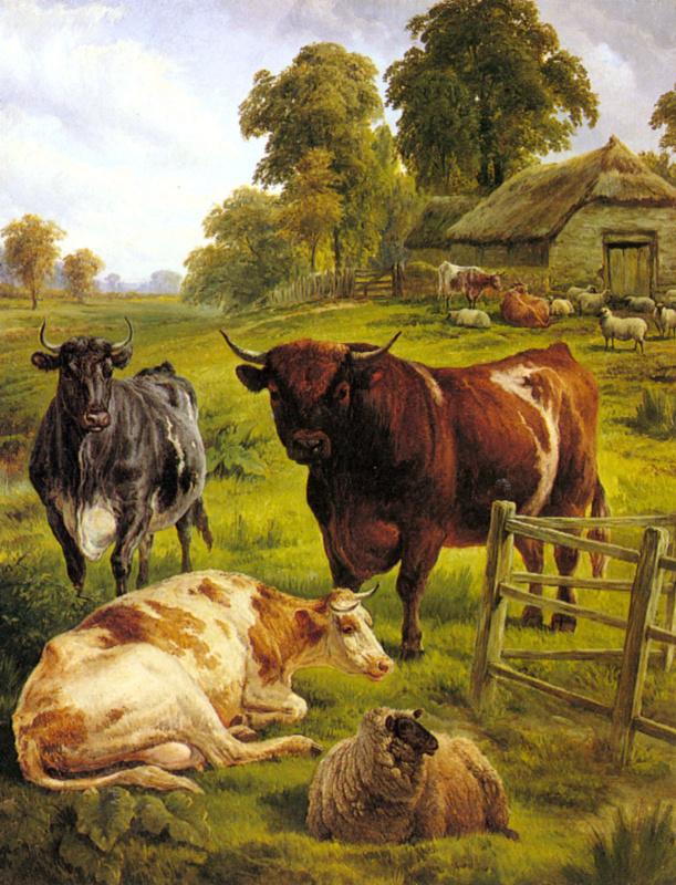 Племенные быки