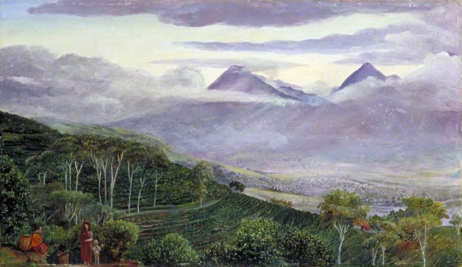 Marianna North. Tea Plantations and Papandyan Volcano, Java