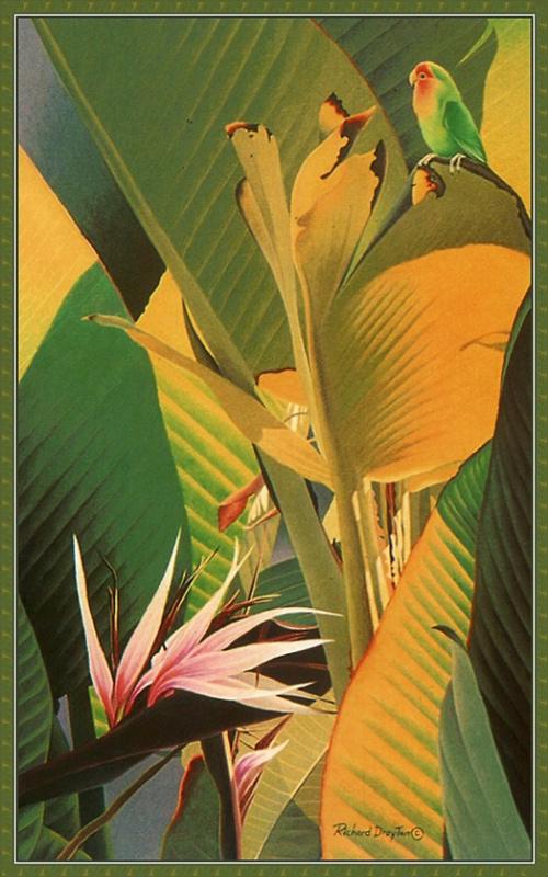 Ричард Дрейтон. Райская птица