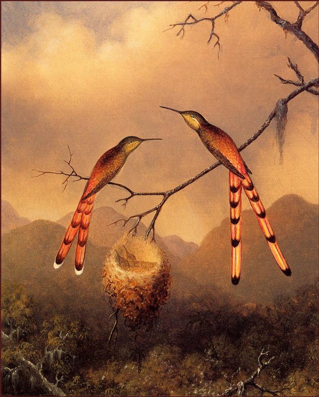 Martin Johnson Head. Hummingbirds at the nest with chicks