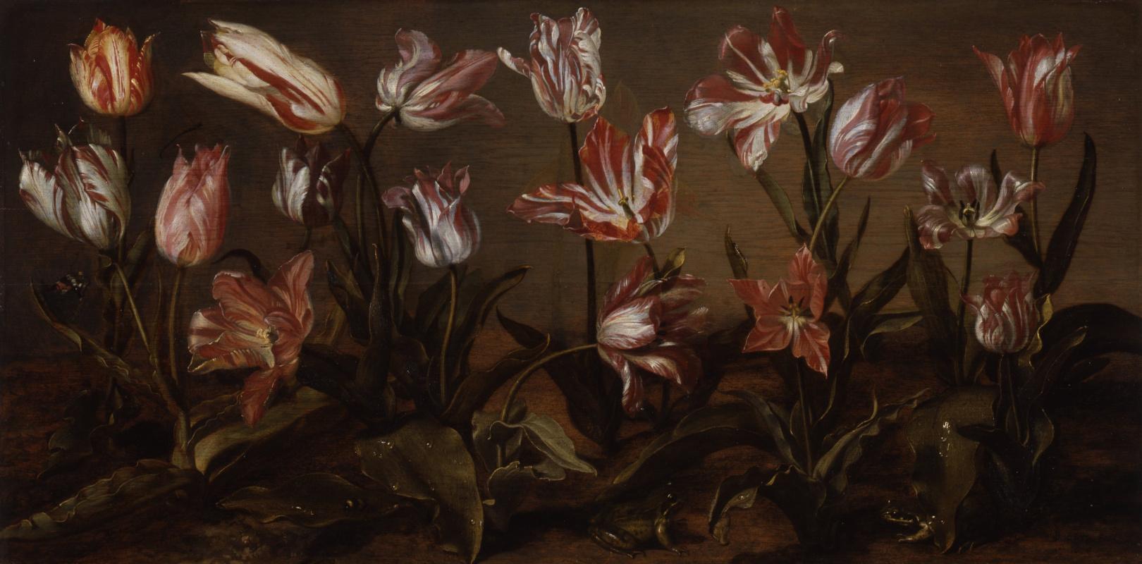 Jakob Gerrits Cape. Tulips