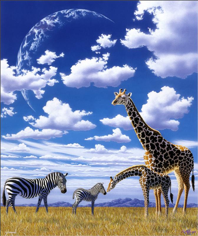 Уильям Шиммел. Жирафы