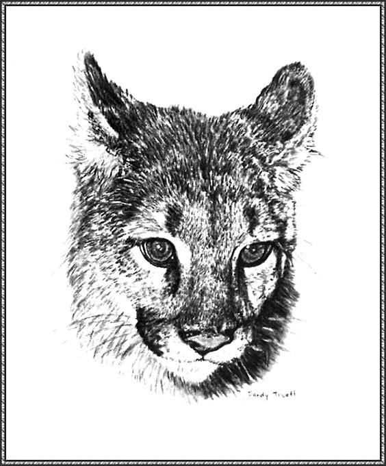 Сэнди Траетт. Горный лев